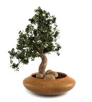 c4d bonsai plant