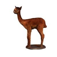 3d alpaca model