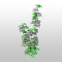 clematis tree flower 3d obj