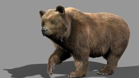 3d bear animation model