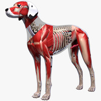 3d max dog anatomy