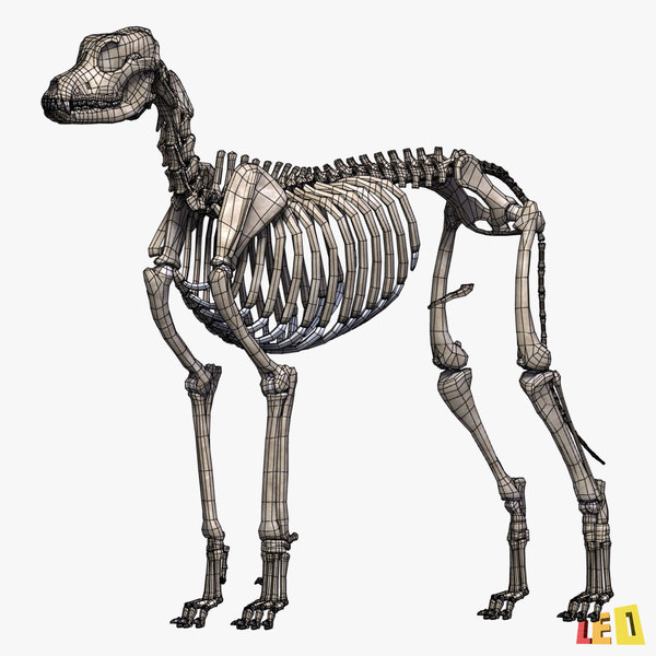 Dog anatomy 3d