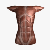 3d female torso model