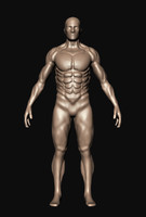 3d model male body template
