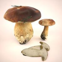 3d model boletus mushroom
