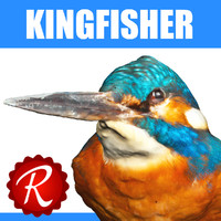 maya kingfisher