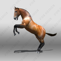 horse animations max
