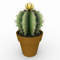 3d model cactus scanline