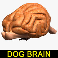 dog brain 3d 3ds