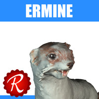 3d model stoat ermine