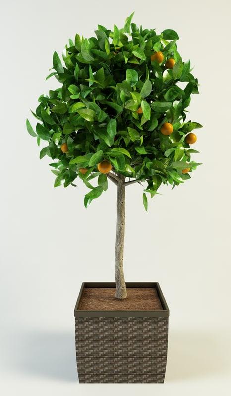 orange_tree_1.jpg