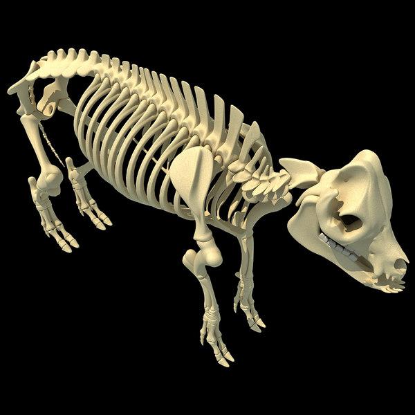 max pig skeleton