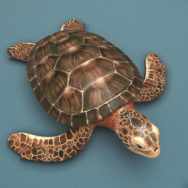 Sea_turtle_render_01.jpg