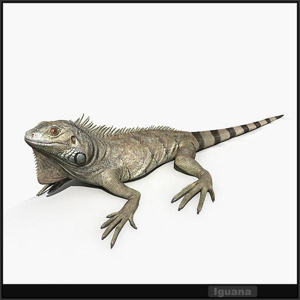 Iguana_Signature_color_600.jpg