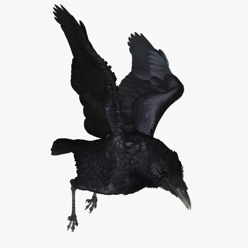 raven_r2_.png