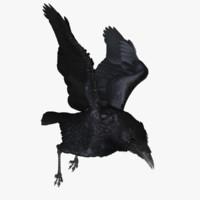realistic raven 3d model