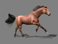 3d model horse mane animation