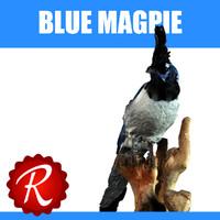 blue magpie max