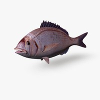 c4d sea bream