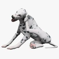 dalmatian dog pose 3d model
