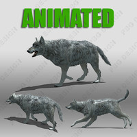 grey wolf animations 3d model