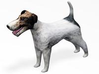 maya fox terrier