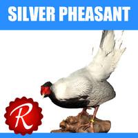max silver pheasant