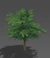 free max model tree