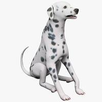 Dalmatian Dog Pose 3