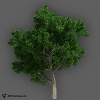 obj broadleaf tree