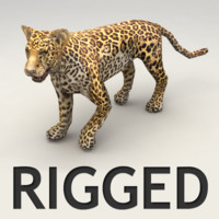 3d rigged leopard model