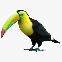 Rainbow Billed Toucan
