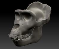 maya gorilla skull