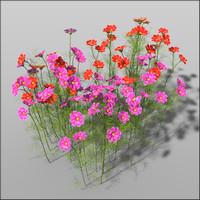 cosmos blossoms 3d c4d