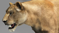3ds max lioness lion cat