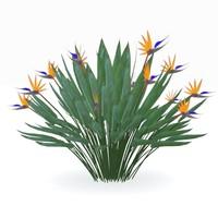 3d strelitzia reginae flowering
