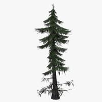 carpathian spruce smereka 3d max