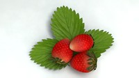 obj strawberry fruit