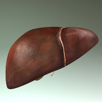 human liver max