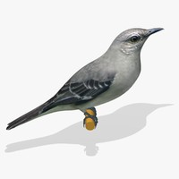 3d northern mockingbird birds ab model
