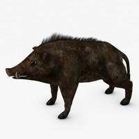 3dsmax wild boar