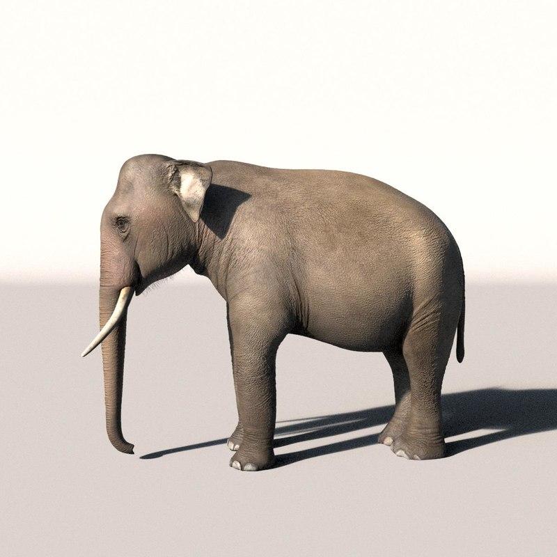 Elephant_Side_view.jpg