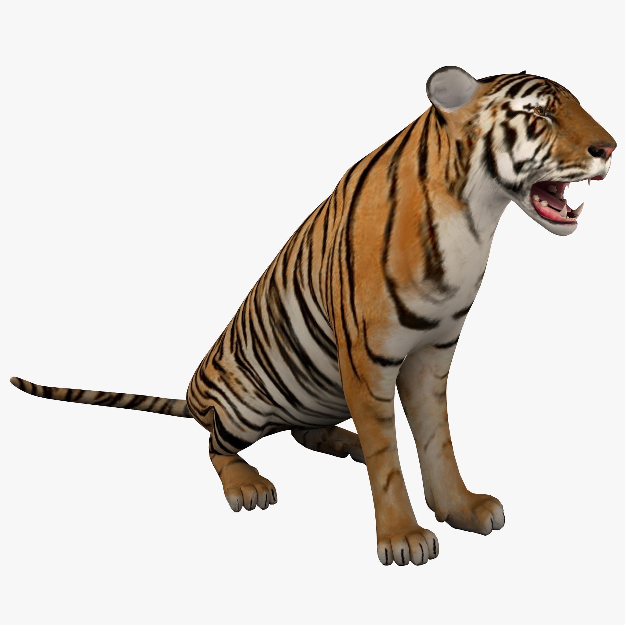 Tiger 2 Pose 3_1.jpg