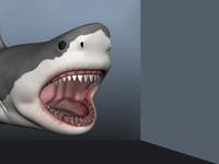 maya shark