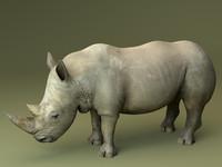 3d rhinoceros