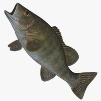 3ds max wall small mouth bass