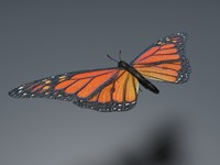 orange butterfly 3d obj