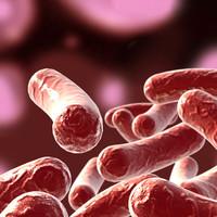 bacillus max