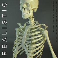 human skeleton body man 3d model