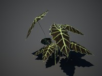 tropical plant 3d obj
